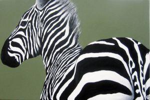 Zebra-got-back