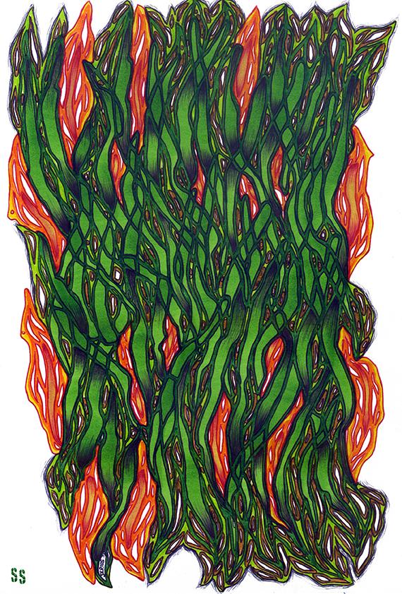 samserif_grassfire_LR